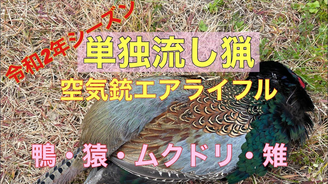 狩猟令和2年 単独流し猟 空気銃エアライフル 鴨・猿・ムクドリ・雉