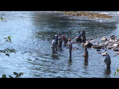 cowlitz river combat fishing