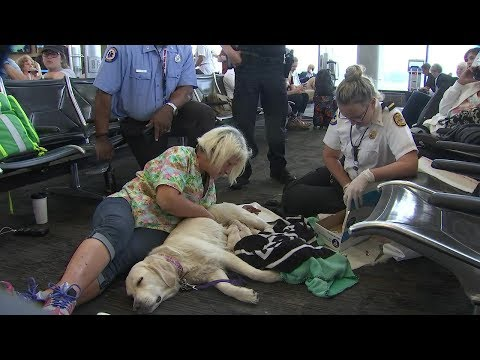 Shuman - Dog gives birth to eight puppies in the airport!