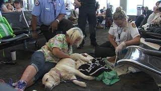 「赤ちゃんが生まれちゃう!」空港で産気づいた犬、ゲート前で元気な赤ちゃんを産み落とす