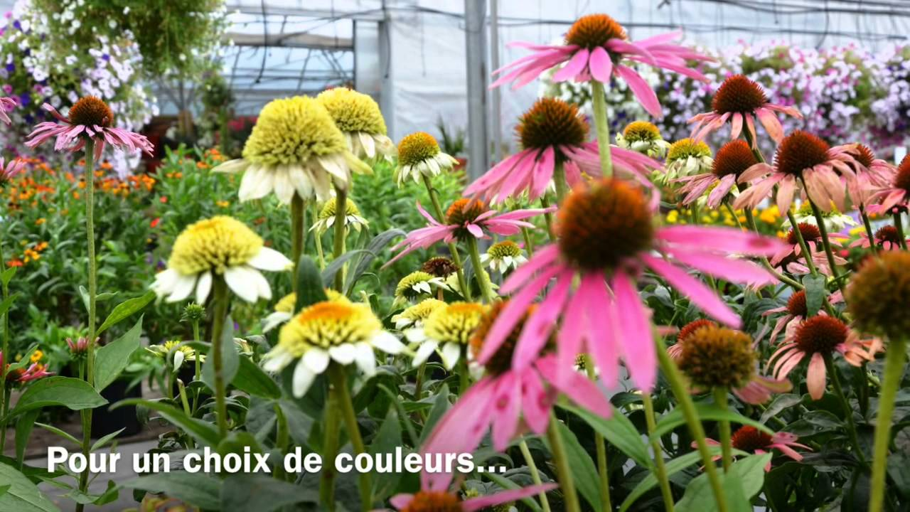 Jardin floral p pini re paysagiste sherbrooke youtube for Jardin floral
