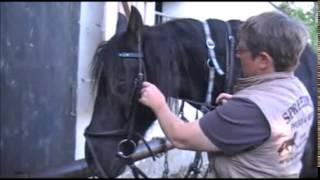 Trense anlegen mit Martingal und Sperrriemen - Pferde Wissen vom Reitshop Spree-Reiter
