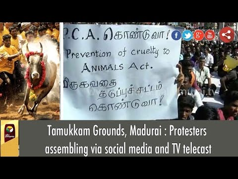 Tamukkam Grounds, Madurai : Protesters assembling via social media and TV telecast