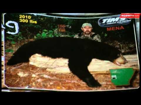 Arkansas Black Bear Population Ripe For Hunting