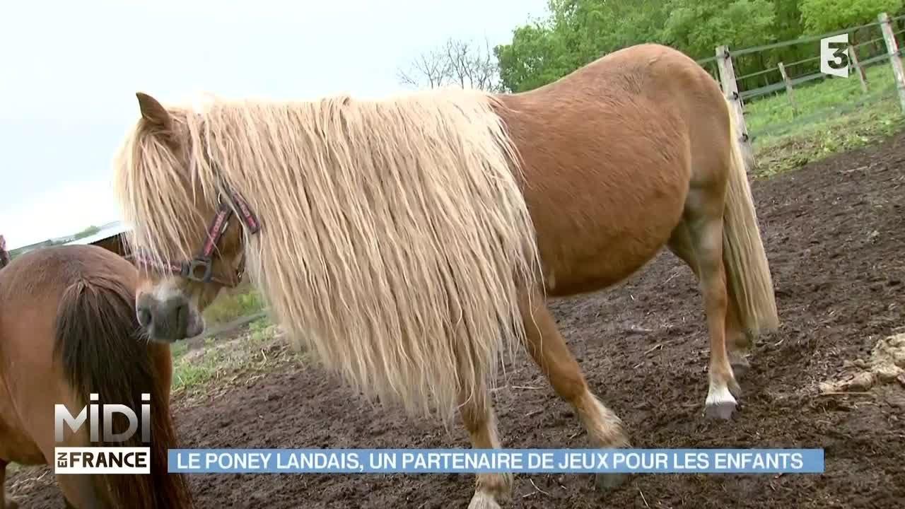 Animaux nature le poney landais un partenaire de jeux - Jeux de poney ville gratuit ...