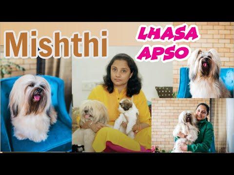Misthi | Lhasa apso Female dog | Pet Parent | Dog Lover Priya Malhotra