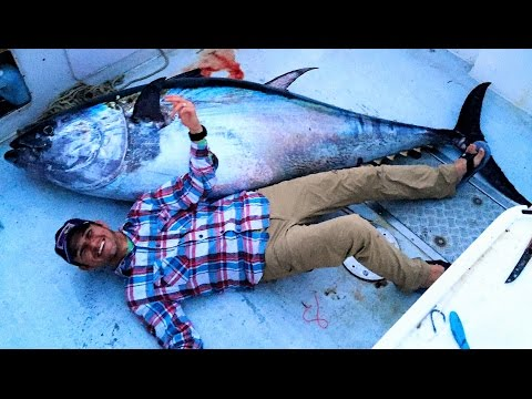 Giant Bluefin Tuna :: North Atlantic Fishing