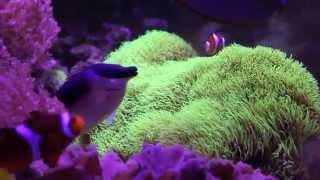My 120g Saltwater Fish Tank