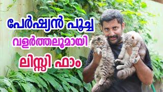 Lissy's Persian cat farm thrissur [ECO OWN MEDIA] പേർഷ്യൻ പൂച്ച വളർത്തൽ
