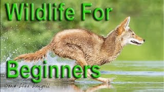 wildlife photography for beginners ep 19