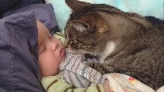 Cat and Baby Playing - Greatest Fails of Cats and Babies