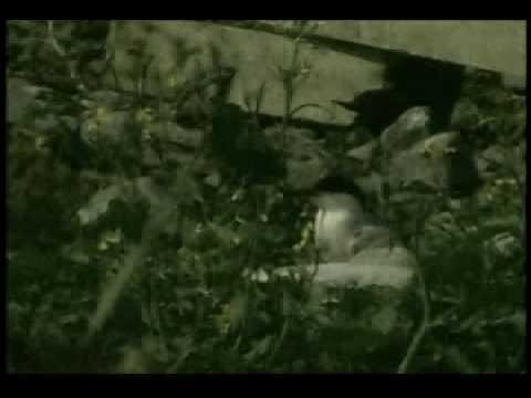 The Roseate Tern