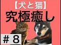 【癒されすぎに注意!】犬 VS ライオンの結末は!?