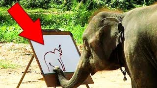 У этого слона настоящий талант! 7 САМЫХ УМНЫХ ЖИВОТНЫХ в мире. Интересная подборка топ 10