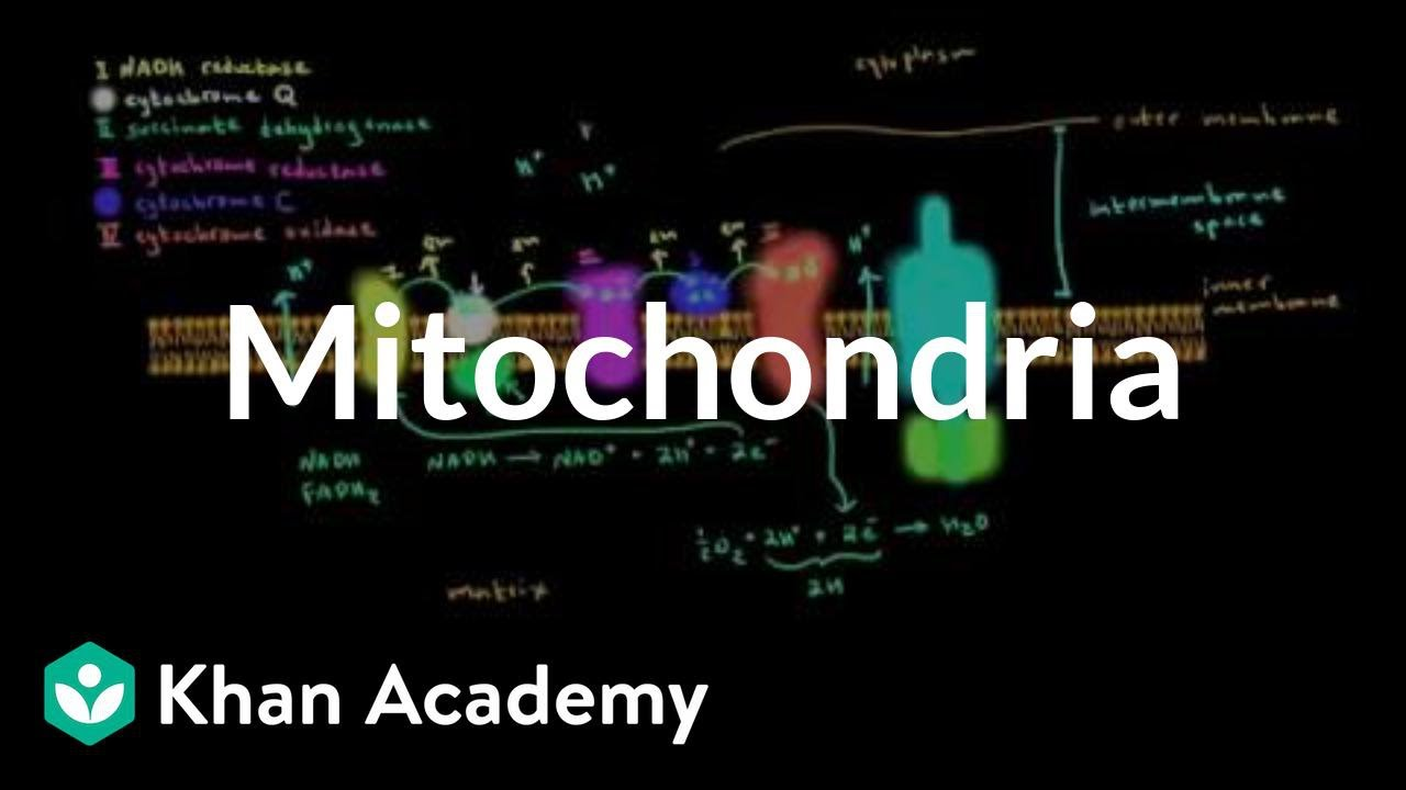 Image result for Mitochondria | Structure of a cell | Biology | Khan Academy