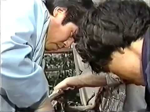 The World of Bonsai Master Masahiko Kimura  Part 2