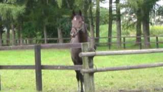 Trip to Hokkaido - Another Horse at Yoshida Ranch