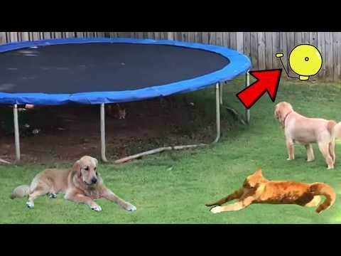 Dog vs Cat Standoff