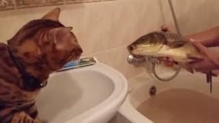 A cat and a big fish in bathroom / Кот и большая рыба в ванной