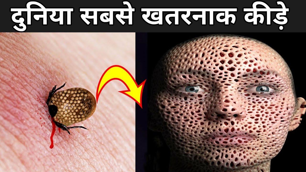 दुनिया सबसे खतरनाक कीड़े | Most Dangerous Bugs In Hindi