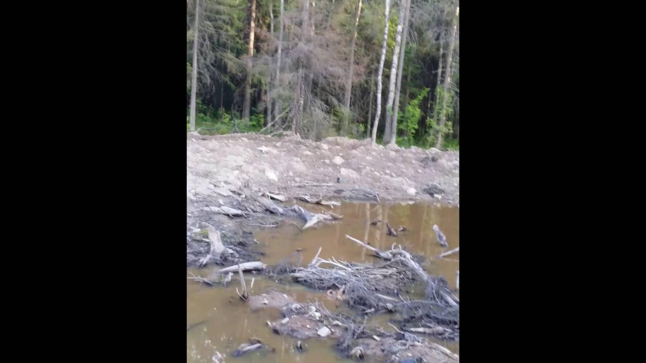 Как отвести воду с участка своими руками фото 895