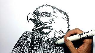 Menggambar Burung Elang