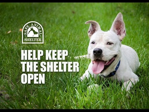 Help feed the animals at Safe Animal Shelter