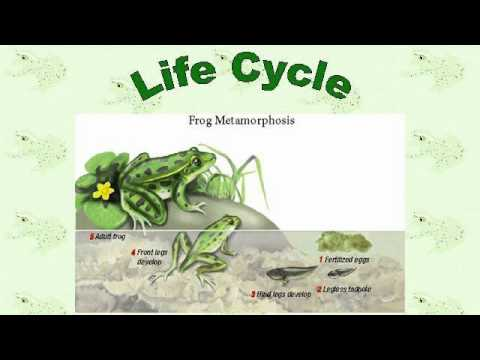 Life Cycle Of The Stick Insect Youtube