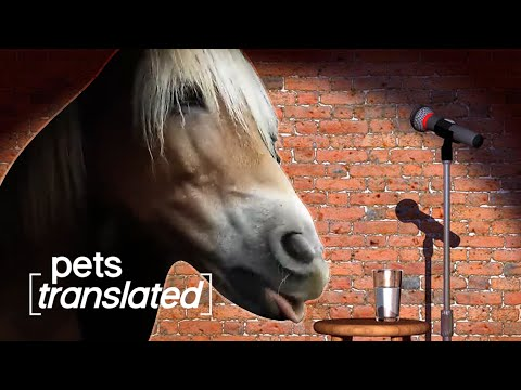 Animals Got Talent   Pets Translated