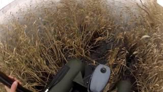 Охота с Лабрадором на утку