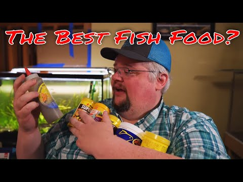 The Best Fish Foods - An In Depth Look At All The Fish Food I Like And Use