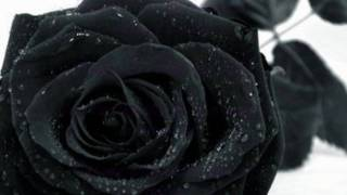 Firewind - Wild Rose-Days of Defiance