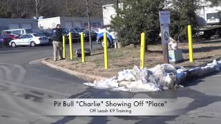 "Pit Bull ""charlie"" Practicing His Place Skills: Dog Training In Northern Virginia"