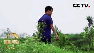 《遍地英雄》 20200428 冲口屯的春天|CCTV农业