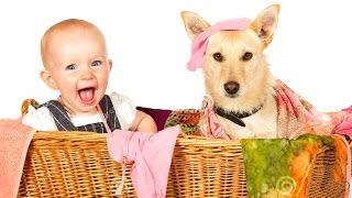 Дети от души смеются над собаками * Barn hjertelig le av hunder