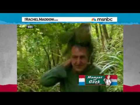 Kakapo parrots Sex Life  Rachel Maddow