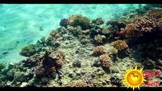 Отзывы отдыхающих об отеле Hilton Sharm Dreams Resort 5*  г. Шарм-Эль-Шейх (ЕГИПЕТ)