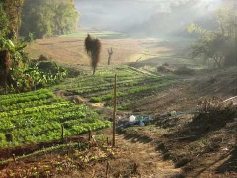 Mindful Farmers, Thailand