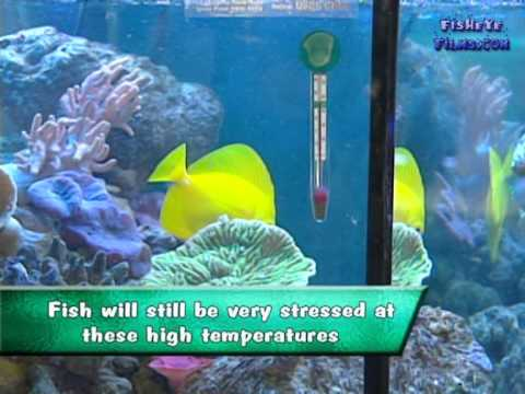 The Actual Correct Temperature For A Reef Aquarium