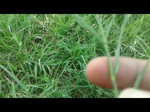 कुछ भी कम करने से पहले जब में डाल ले हरी घास मिलेगी कामयाबी ही क़ामयाबी
