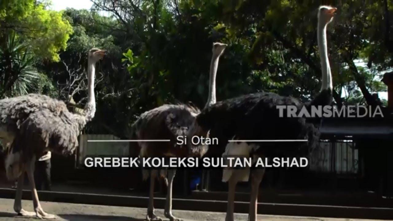 [FULL] Gerebek Koleksi Sultan Alshad | SI OTAN (05/03/21)