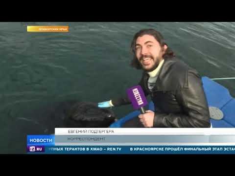 Всех косаток и белух решено освободить из Китовой тюрьмы