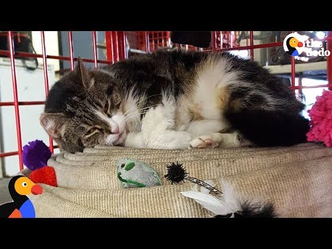 Stray 'Killer' Cat Makes EMS Station Her New Home | The Dodo