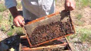 Минути за пчеларство,разговор с Иван Бакърджийски 2ра част
