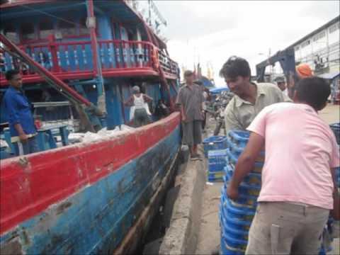 Pendaratan dan Pembongkaran Ikan