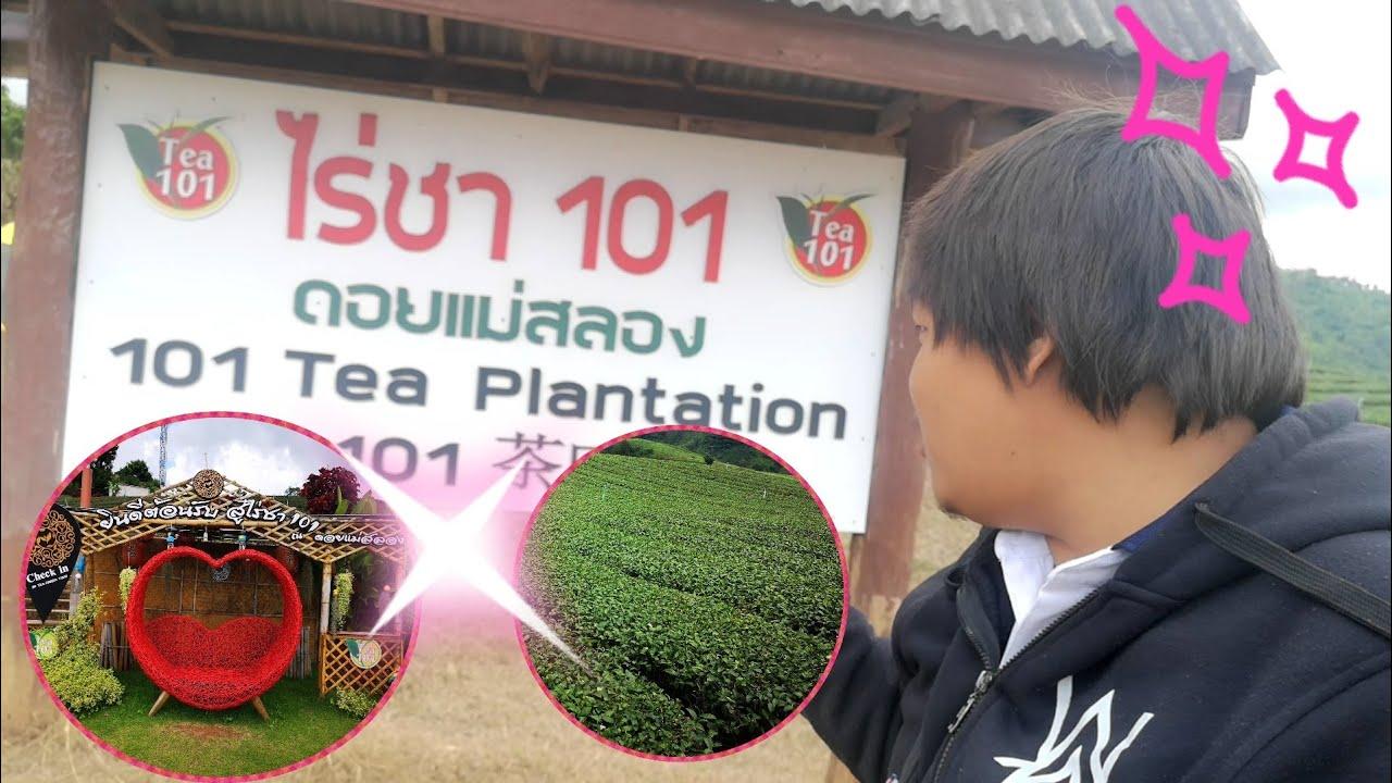 เที่ยวเชียงราย ไร่ชา 101 แม่สลอง ถนนคดเคี้ยว!! | เด็กบ้านนอก