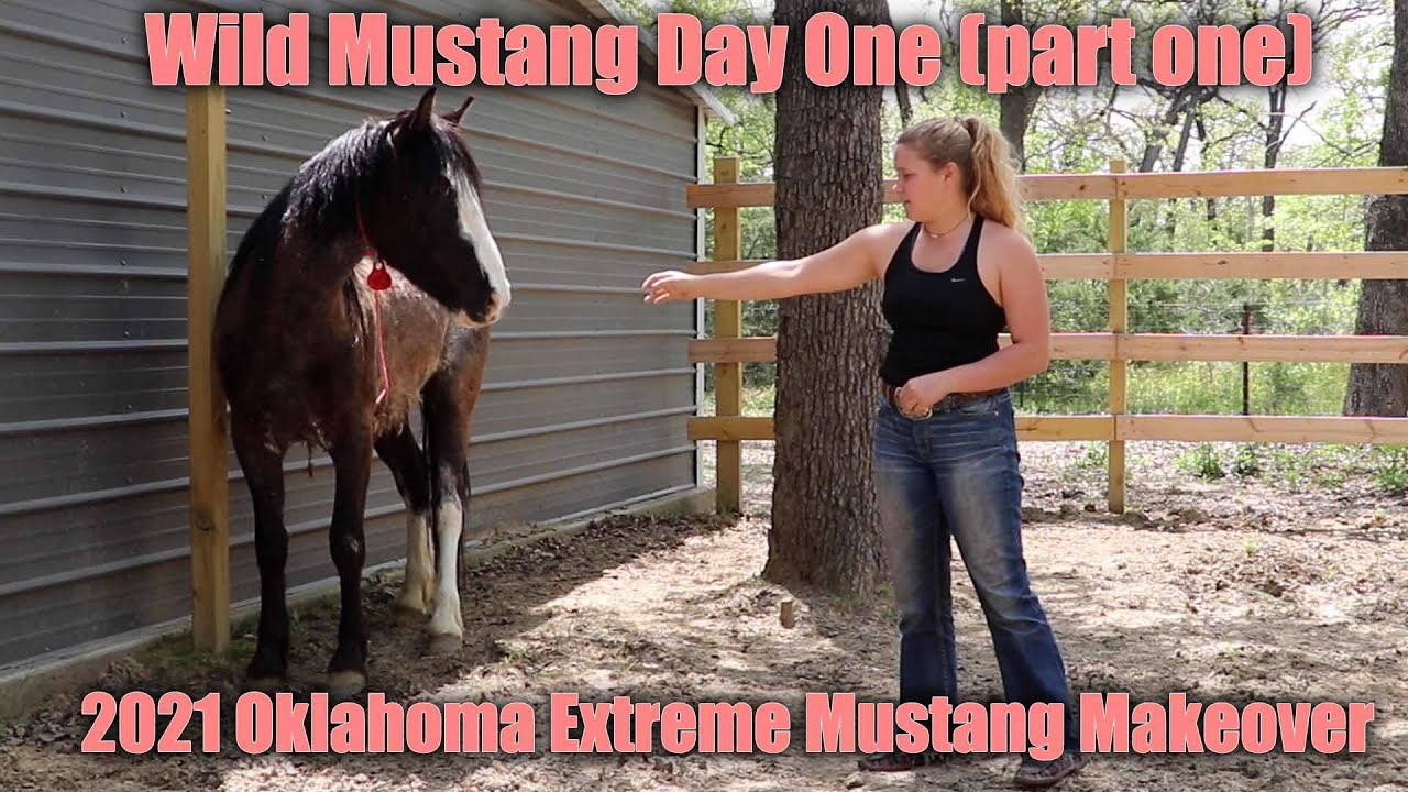Wild Mustang Day One (part one) | 2021 Oklahoma Extreme Mustang Makeover Ep. 2