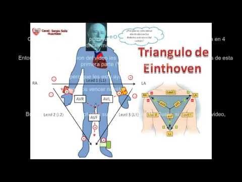 1. Sistema de mando del Corazon y el Triangulo de Einthoven, el secreto del ECG.