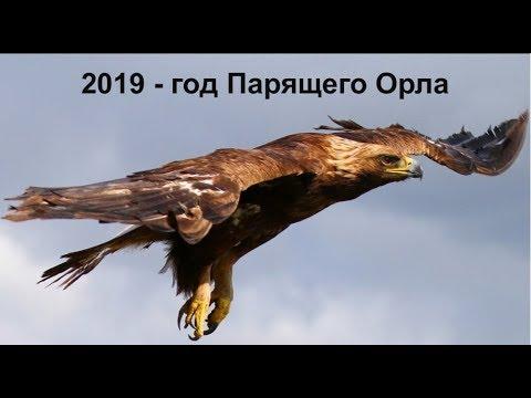 2019 - год Парящего Орла по старославянскому календарю. - Познавательные и прикольные видеоролики