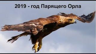 2019 - год Парящего Орла по старославянскому календарю.